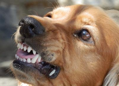 Bark Worse than Bite